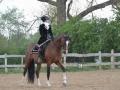Nadin Brenke - www.klassische-pferdeausbildung.info